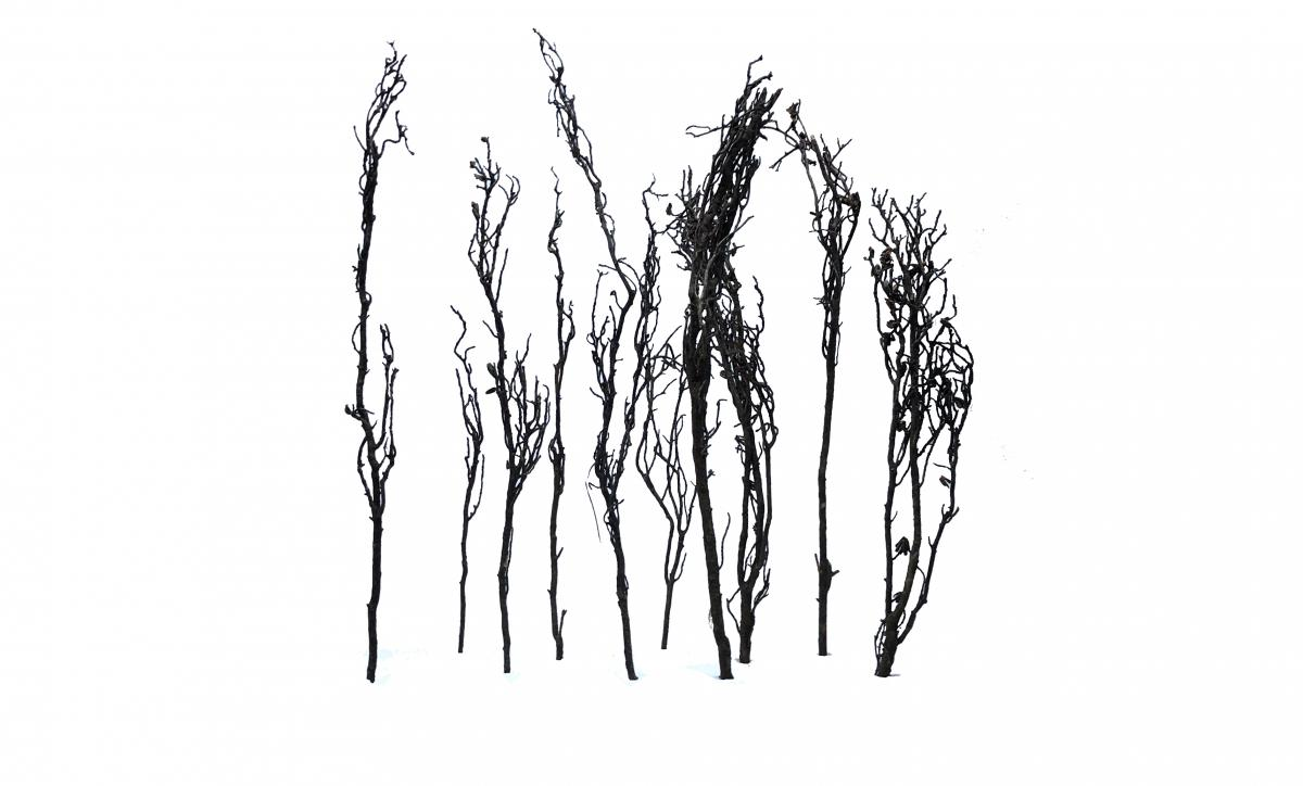 Faraway Trees 10 pieces 20-30cm